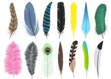 Set Of A Variety Of Feathers - Brushes, Vector, Isolated On White Background.