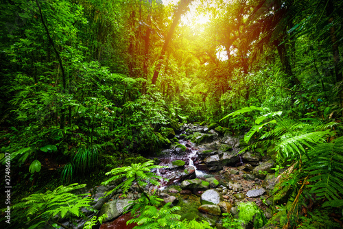 Poster de jardin Vert Small stream in Guadeloupe jungle at sunset