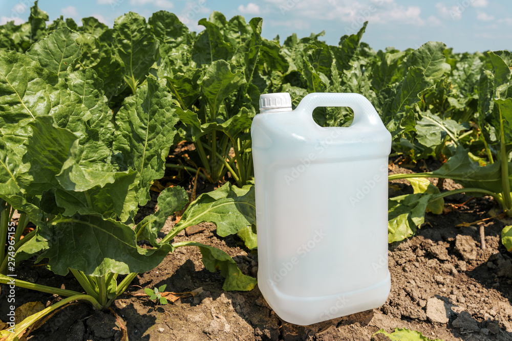 Fototapety, obrazy: Sugar beet crop protection