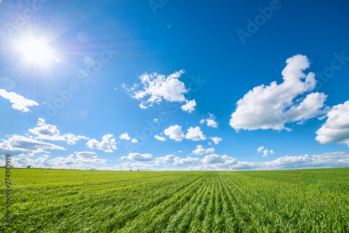 Autocollant pour porte Culture View of agricultural field with white fluffy clouds in blue sky at sunny summer day