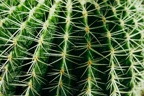 Foto auf AluDibond Kakteen An image of a thorny green cactus