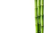 Many bamboo stalks on white background