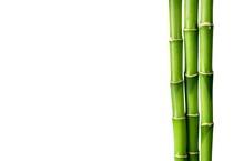 Many Bamboo Stalks On White Ba...
