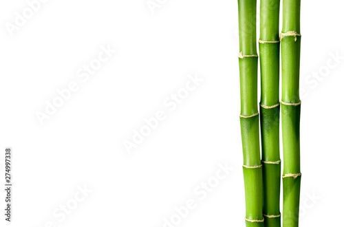 Photo Many bamboo stalks on white background