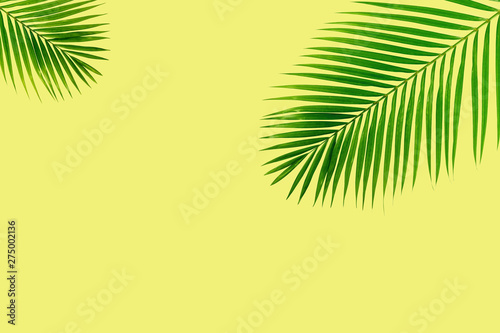 Poster Palmier Palm leaves on yellow white background