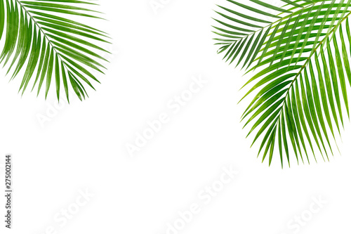 Foto auf Leinwand Palms Palm leaves isolated on white background