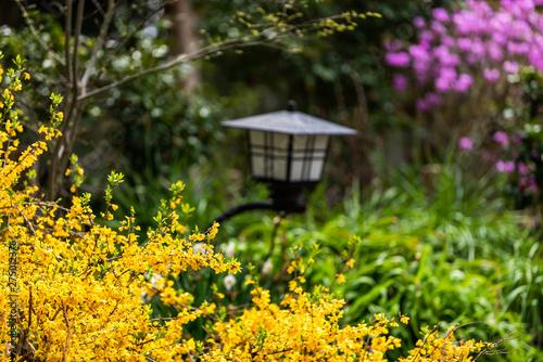 Nara Japan Garden During Spring With Closeup Of Yellow Forsythia