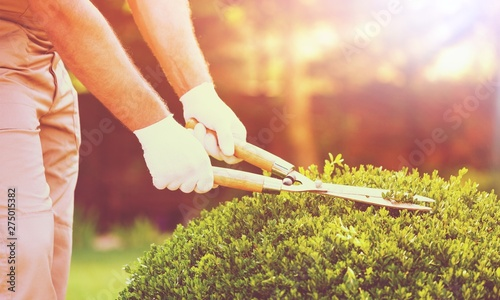 Poster Ecole de Danse Young man in work uniform cut green tree