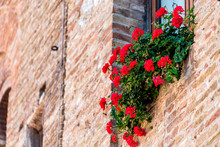 San Gimignano, Italy Village City In Tuscany And Closeup Of Many Red Flower Decorations On Summer Day Nobody Architecture Stone Wall Of Home