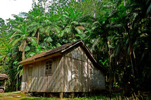 Wooden House Surrounded By Palm Trees In Jacinto Machado, Santa Catarina, Brazil