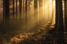 Dark Mystical Autumn Forest Wi...