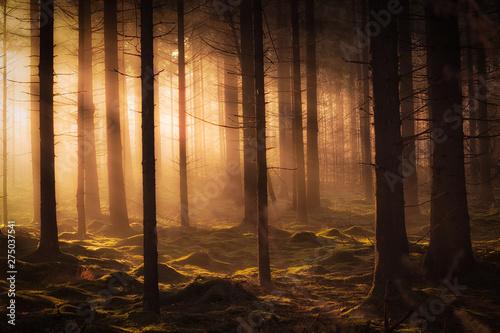 Dark mystical autumn forest with fog and warm sunlight Wallpaper Mural