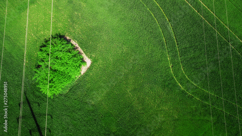Cadres-photo bureau Arbre aerial view of grass field. natural amazing romantic green spring summer background. road and tree in the shape of a heart. drone shot. Farmland from above.