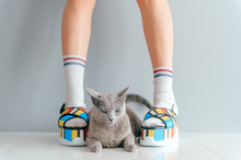 Beautiful Female Legs Wearing Fashionable Shoes With Lovely Kitten On Gray Background.