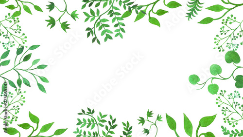 Fotografija  cornice verde piante verdi differenti sfondo bianco