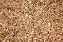 Background Of Dry Hay