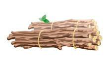 Vector Image Shows Brown Branches With Green Leaves Stack Bound With Yellow Cord Cartoon Style