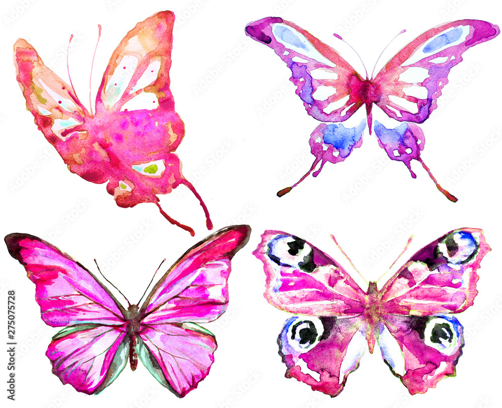 Fototapety, obrazy: beautiful pink  blue butterfly,watercolor,isolated on a white background