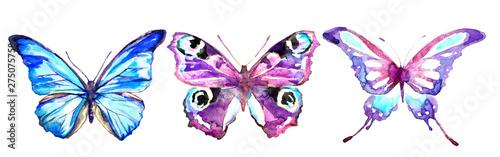 Fotografie, Obraz  set of colorful butterflies