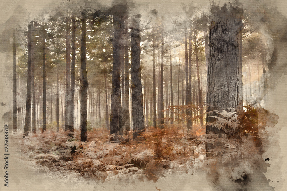 Fototapeta Digital watercolor painting of Pine forest Autumn Fall landscape foggy morning