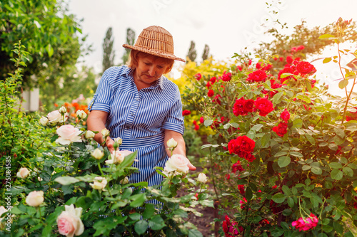 Foto Senior woman gathering flowers in garden