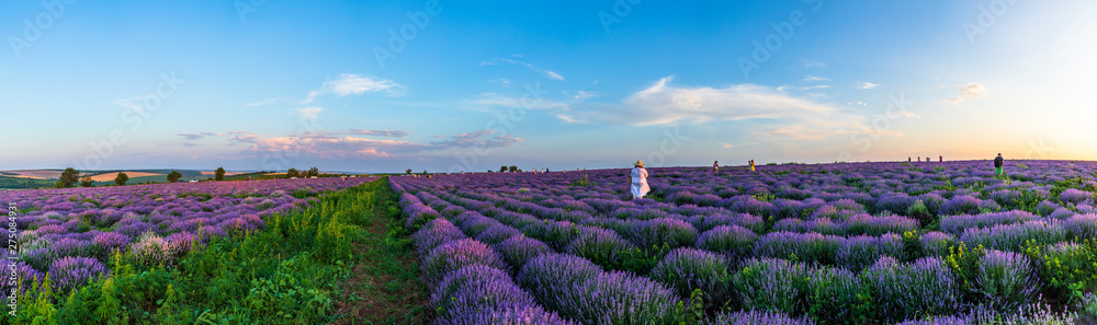 Fototapety, obrazy: The girl poses for the photographer on the lavender fields