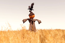 Scarecrow Pumpkin In Field,3d ...