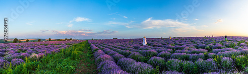 The girl poses for the photographer on the lavender fields