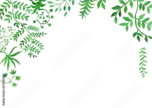 cornice piante verdi acquerello Fototapeta