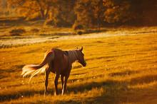 Beautiful Horse On A Farm In E...