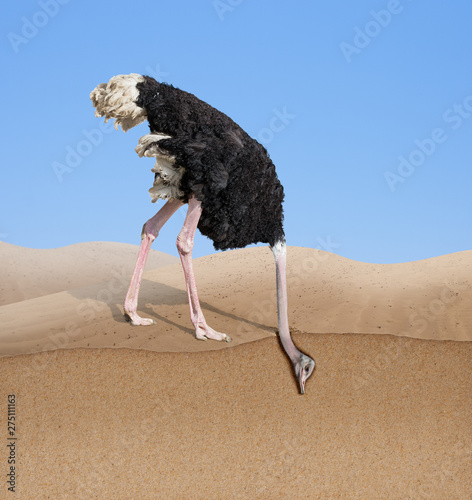 Stickers pour portes Autruche ostrich with head burying in sand concept