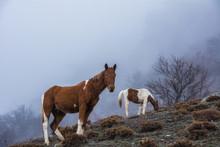 Two Horses Graze In The Fog In The Mountains Demerdzhi