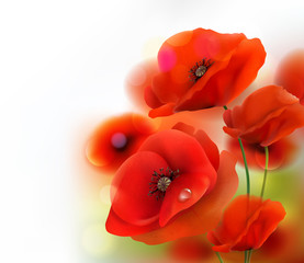 Fototapeta Maki Red Poppy flower background. Vector illustration