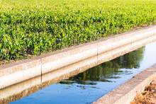 Water Canals For Irrigation In...