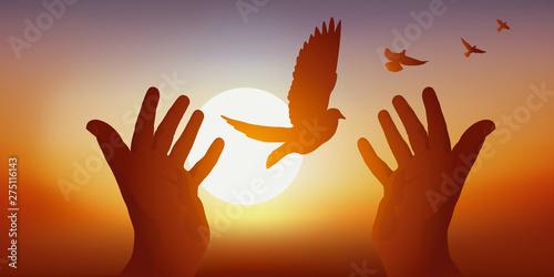 Concept de la paix et de liberté avec deux mains tendues, relâchant un vol de colombes dans le ciel au soleil couchant