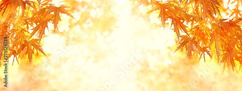 Foto auf AluDibond Weiß Autumnal maple leaves. autumn sunny background with bright red maple foliage. Autumn leaves on blurred nature landscape. Fall background. banner, copy space