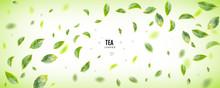 Flying Fresh Green Tea Leaves Vector Background