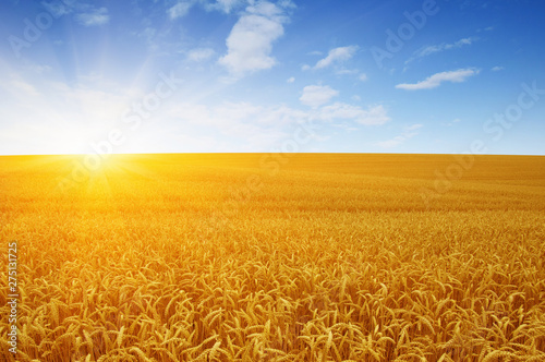 Poster Affiche vintage Wheat field and sun