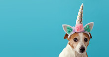 Funny Unicorn Little White Dog On Blue Background With Copy Space