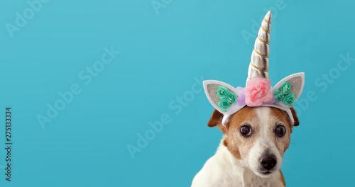 Funny unicorn little white dog on blue background with copy space Fototapeta