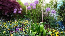 Small Garden With Multiple Flowers In A Big Flower Bed.