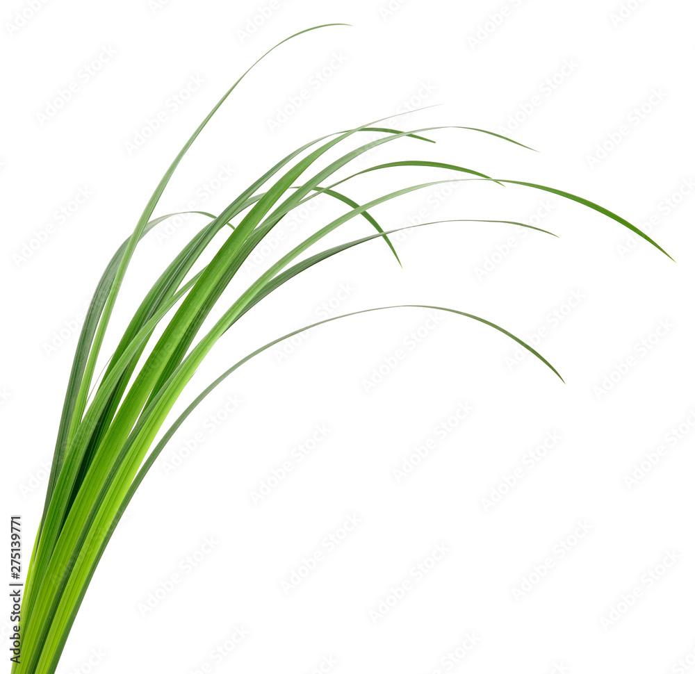 Fototapety, obrazy: green grass leaves