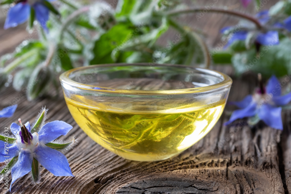 Fototapety, obrazy: A bowl of borage oil with blooming borage plant
