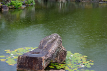 A Beautiful Rock Surrounded By Lily Pads In A Formal Japanese Garden. On A Rainy Day, Droplets Are Visible In The Air And On The Water..
