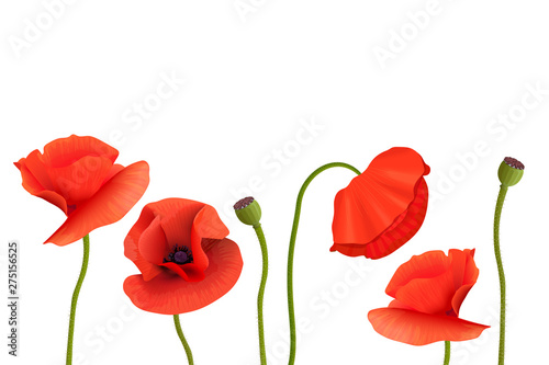 Photo  Poppies Stems and flowers on bottom