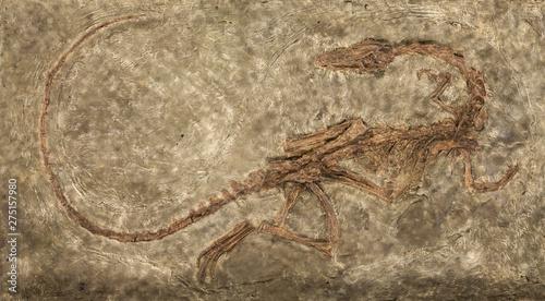 Fotografía  Carnivores dinosaur Zelovitis. Triassic period. USA, NEW Mexico