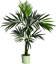 Realistic Houseplant Vector In Bowl Isolated On White Blackground.