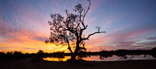 Tree In Silhouette At Dawn In The Australian Outback