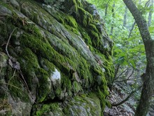 Moss Covered Rocks In The Mountains Of Alabama.