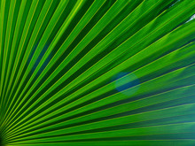The Texture Of The Green Leaf ...